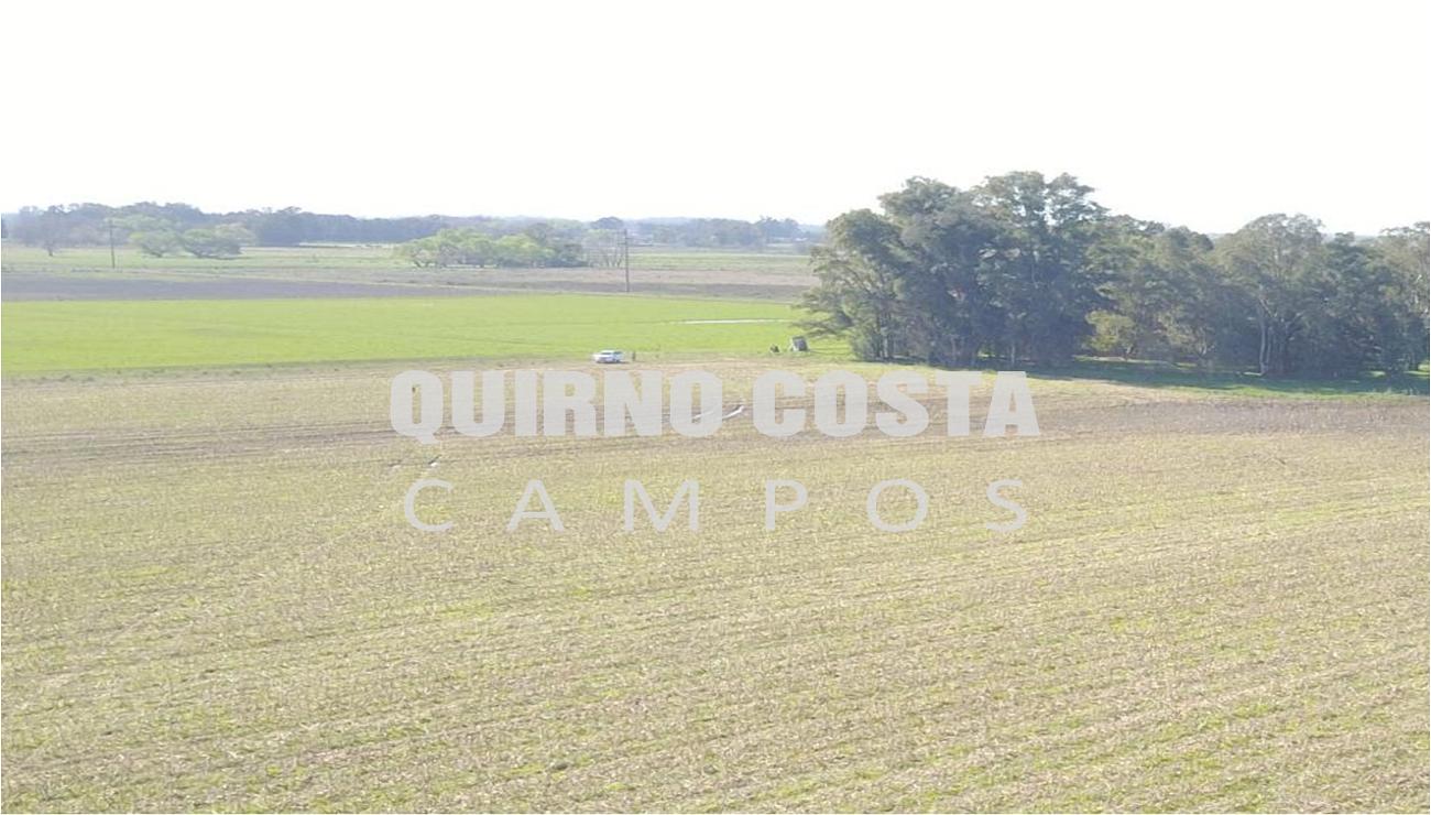 Campo en Saladillo. 21 has. USD 180.000